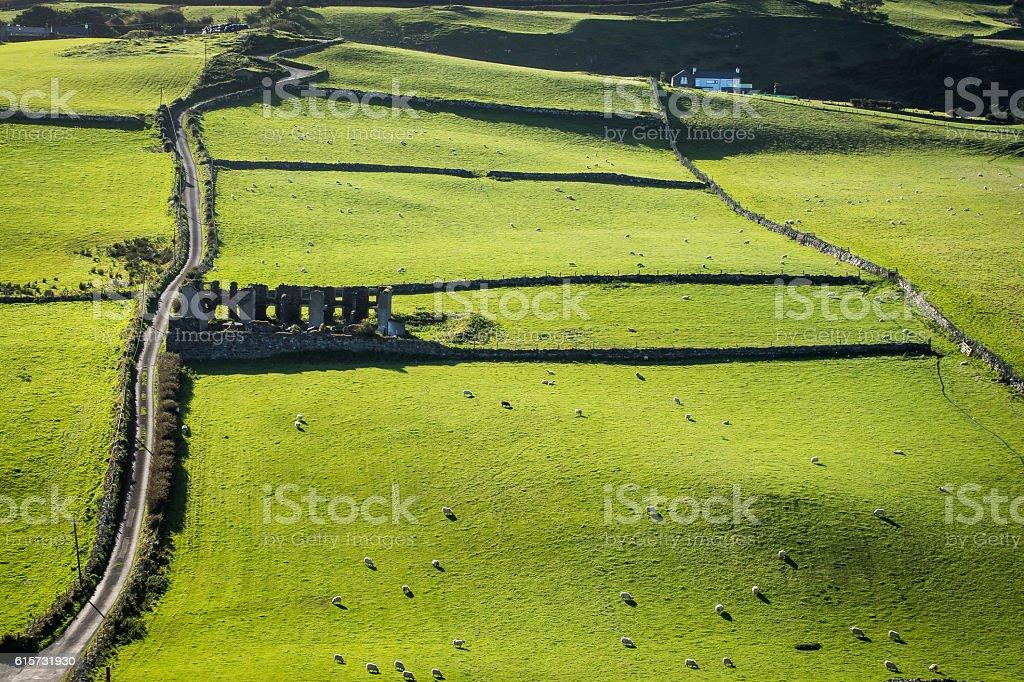 Rolling green fields, sheep grazing, Ireland stock photo