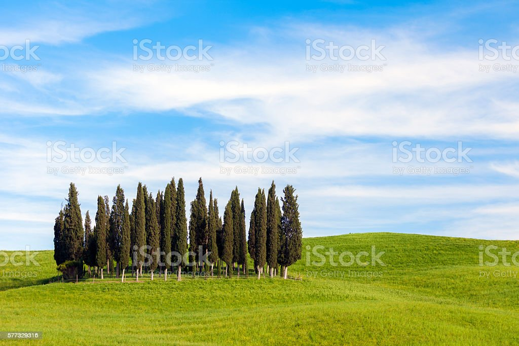 Rolling Hills And Cypress Trees, Tuscany, Italy stock photo
