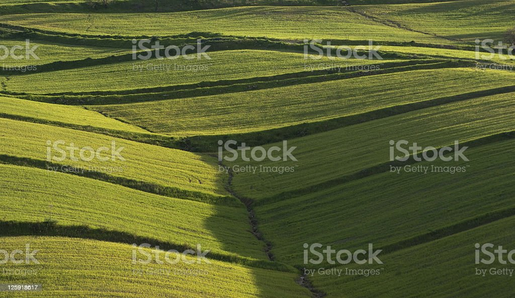 Rolling Hills Cover By Lush Grass royalty-free stock photo