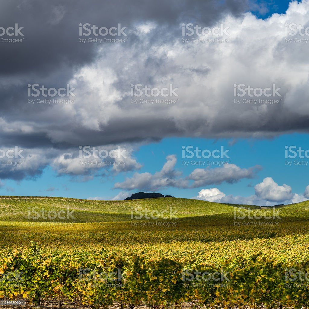 Rolling hills of Napa vineyard on sunny day in autumn stock photo