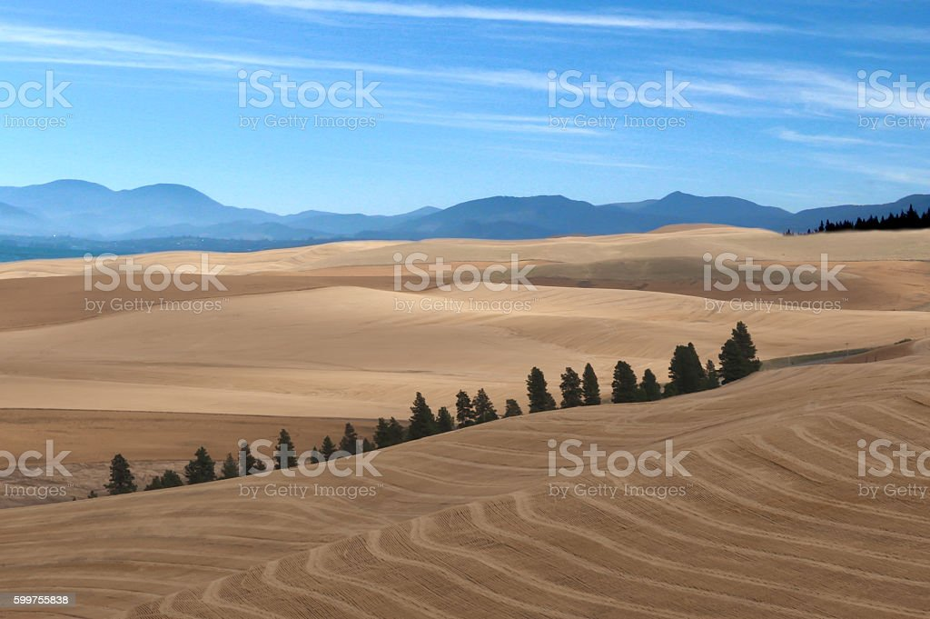 Rolling Hills of the Palouse stock photo