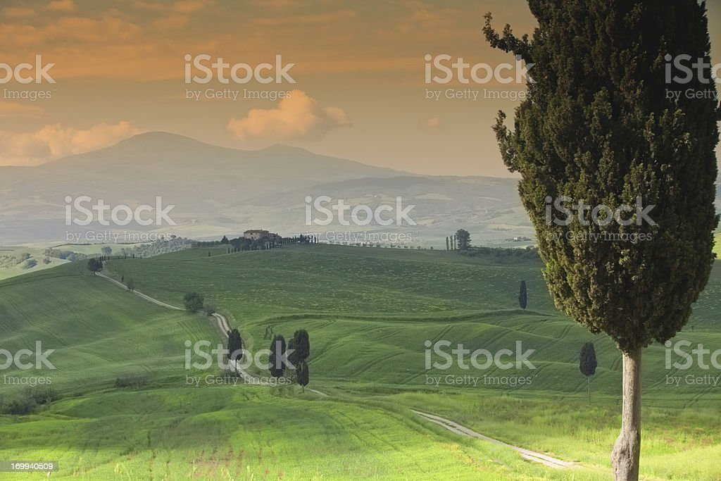 rolling hills with cypress trees royalty-free stock photo