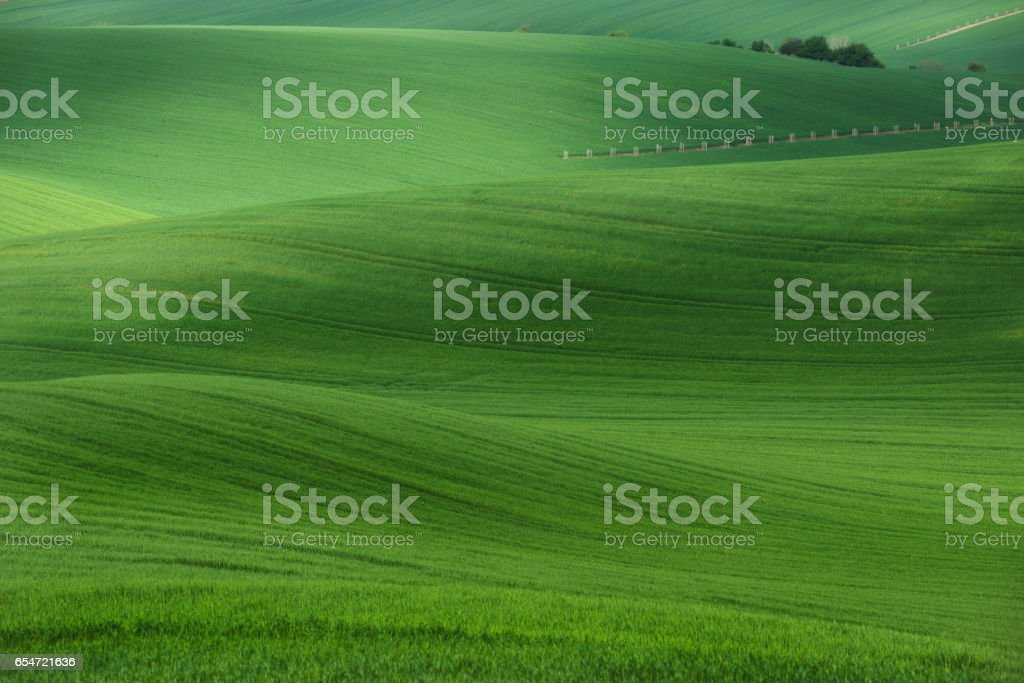 Rolling hills with fields of wheat and trees. Amazing fairy minimalistic spring landscape with green grass fields in the morning in South Moravia, Czech Republic. stock photo