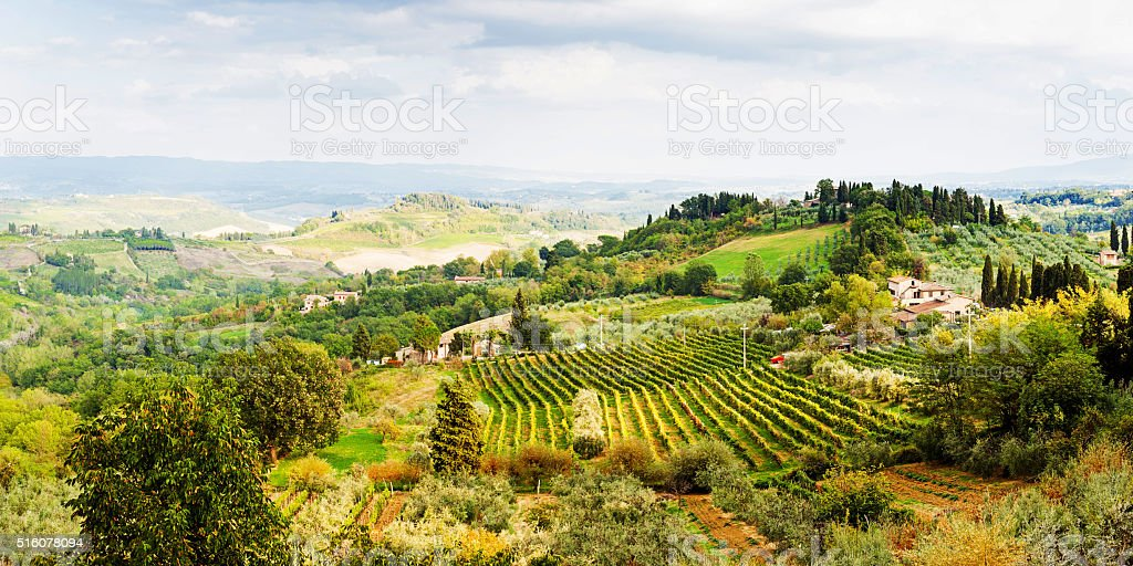 Rolling Hillside Vineyards - Tuscany stock photo