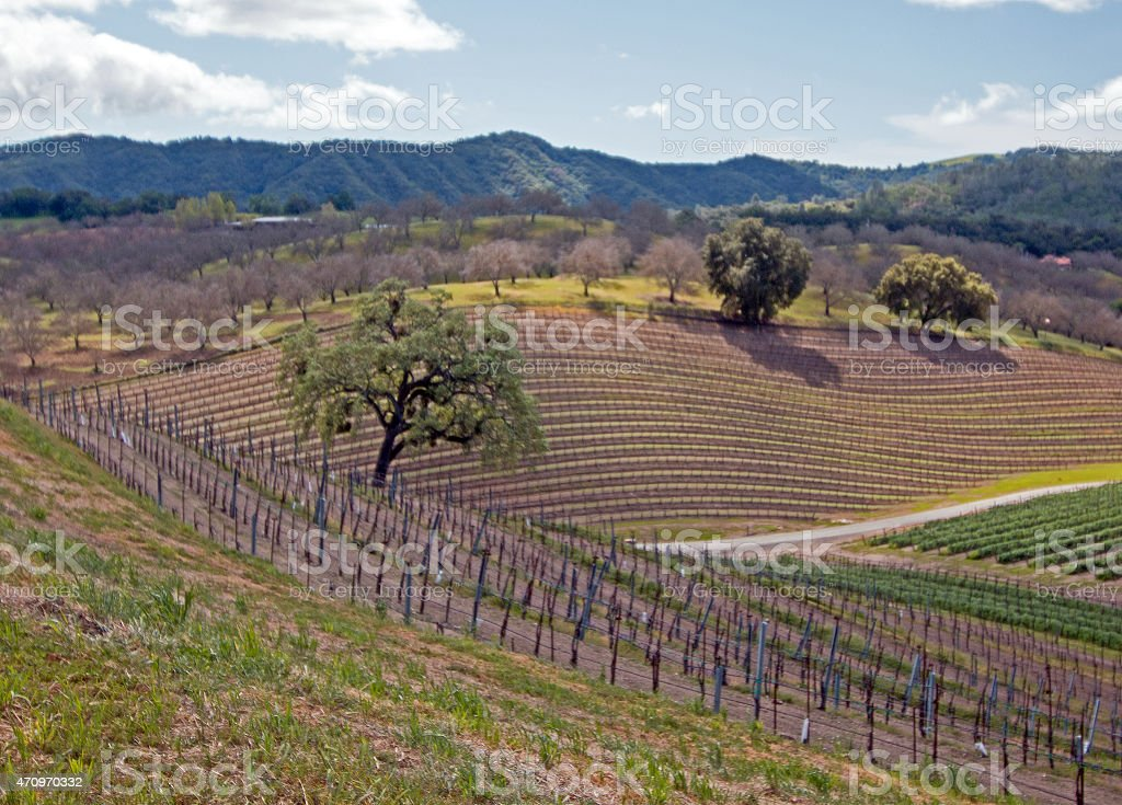 Rolling Hilly Central California Vineyards stock photo