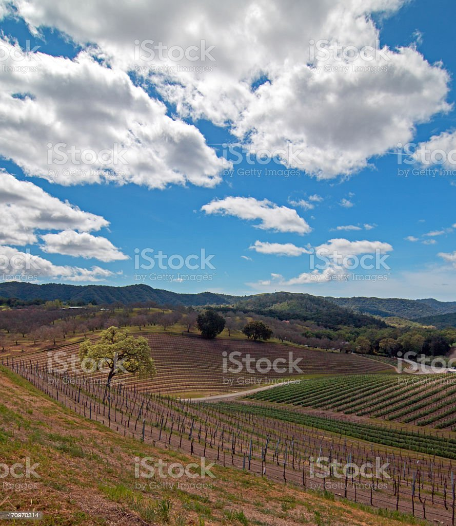 Rolling Hilly Central California Vineyards under clouds stock photo