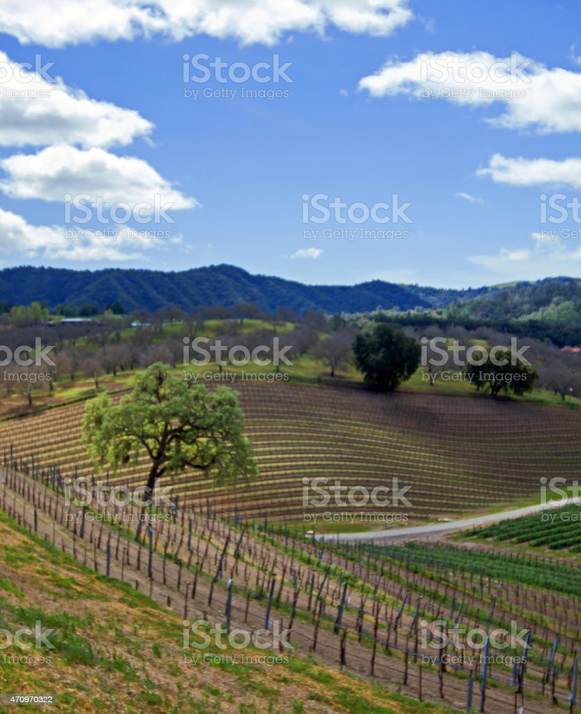 Rolling Hilly Central California Vineyards under cumulus clouds stock photo