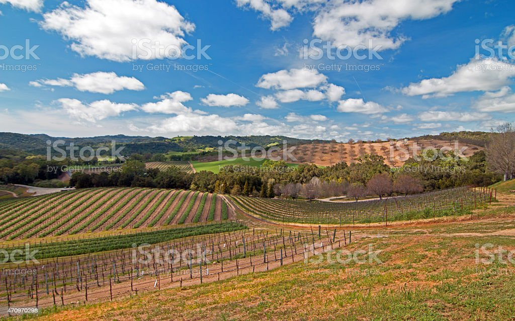 Rolling Hilly Central California Vineyards under cumulus cloudy skies stock photo