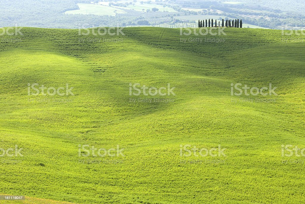 Rolling Landscape, Cypress Trees, Val d'Orcia, Tuscany, Italy stock photo