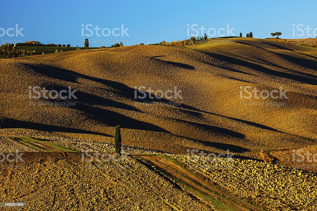 Rolling Landscape With Country Road And Lonely Cypress Tree, Tuscany royalty-free stock photo