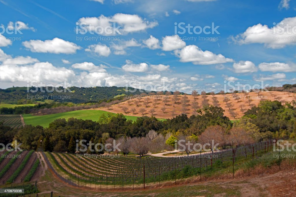 Rolling Paso Robles Vineyards and Orchards under cumulus clouds stock photo