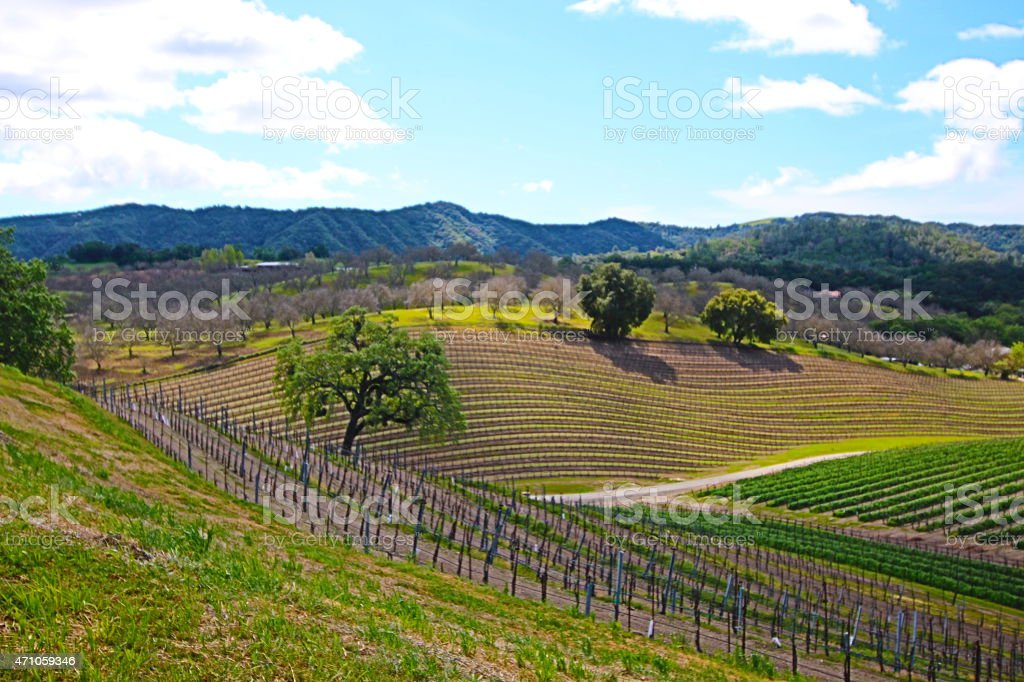Rolling Paso Robles Vineyards under cloudy cumulus skies stock photo