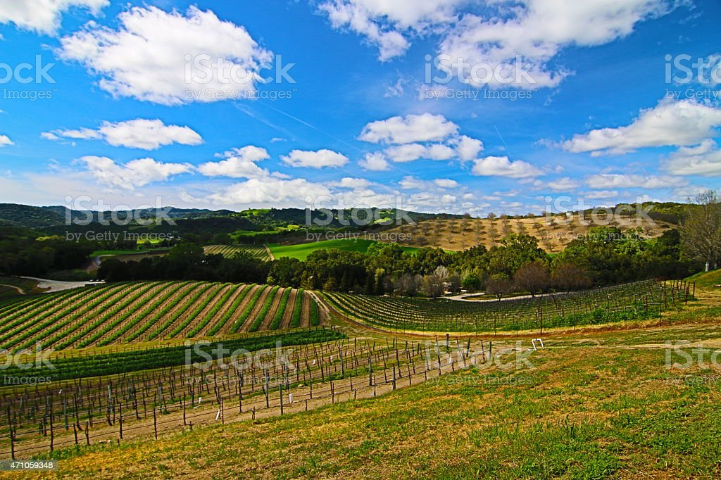 Rolling Paso Robles Vineyards under cloudy skies stock photo