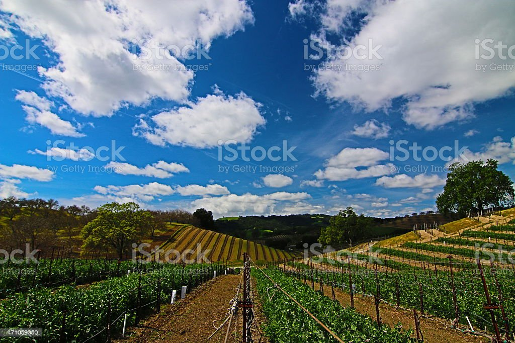 Rolling Paso Robles Vineyards under expansive cloudy skies stock photo