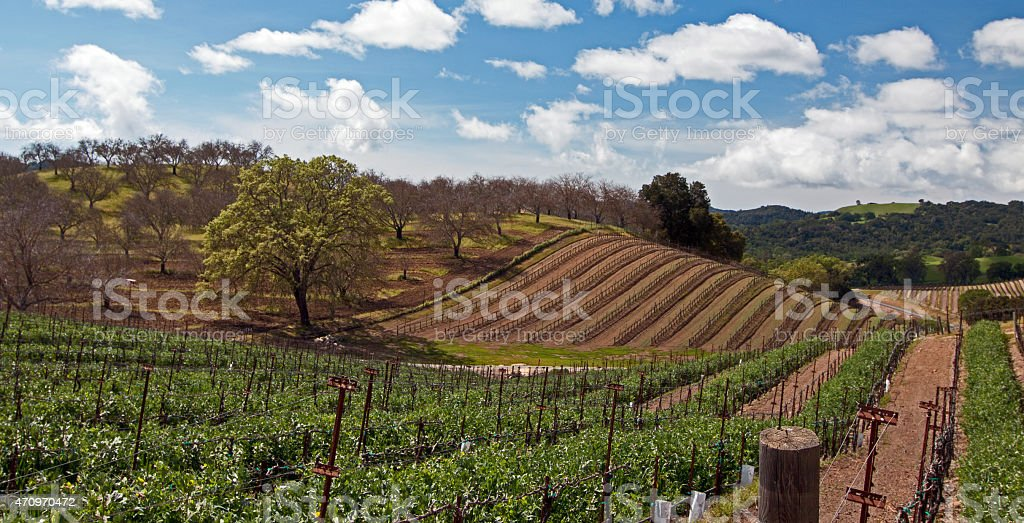 Rolling Paso Robles Wine Country Vineyards under clouds stock photo
