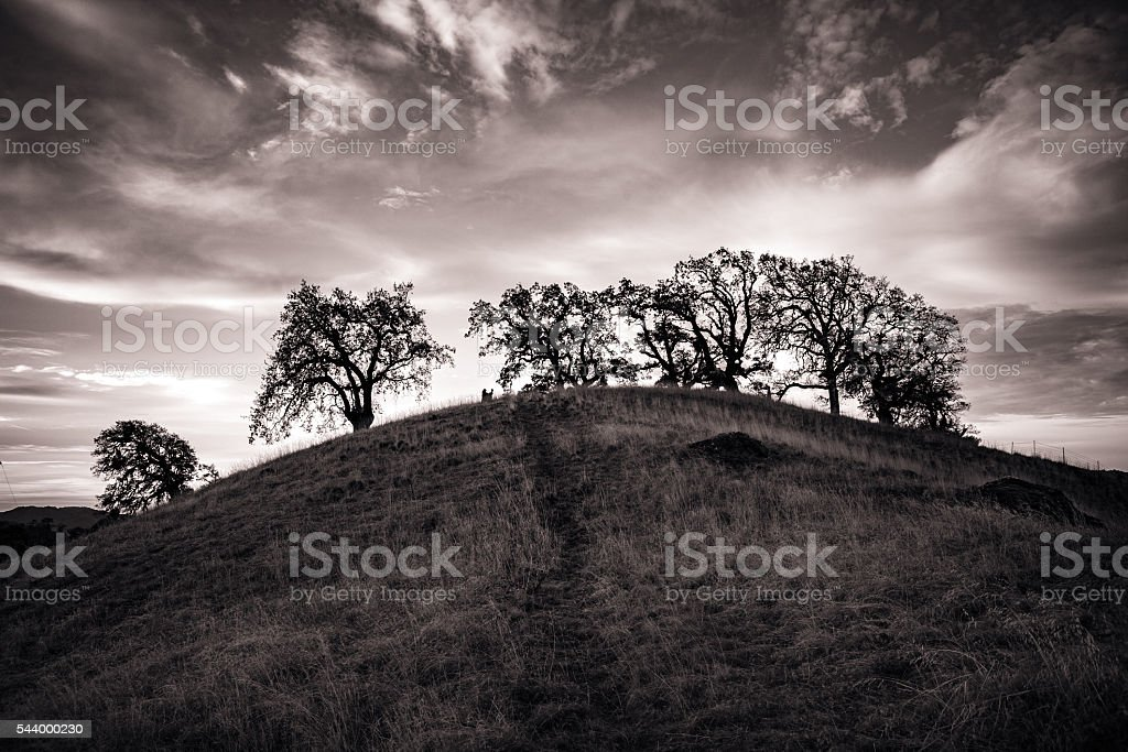 Rolling Pastoral Hills At Dawn, Orr Springs Road, Mendocino County stock photo