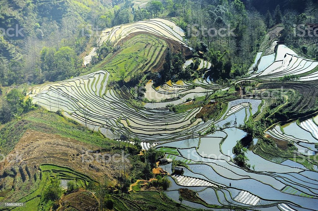 rolling terraced fields royalty-free stock photo