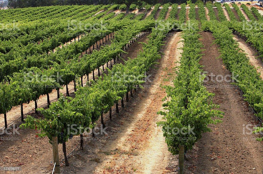 Rolling Vines stock photo