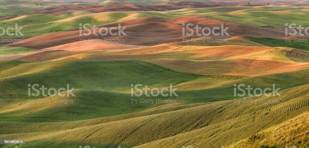 Rolling wheat fields, Palouse stock photo
