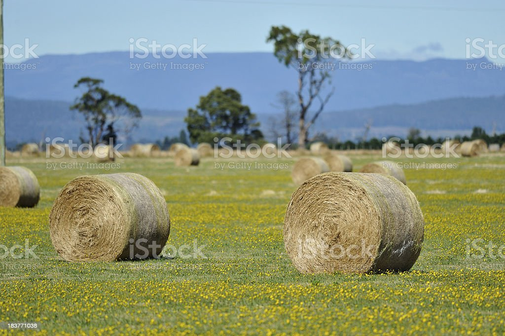 Rolls of straw in the field royalty-free stock photo