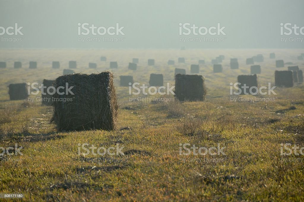 Rolls of straw royalty-free stock photo