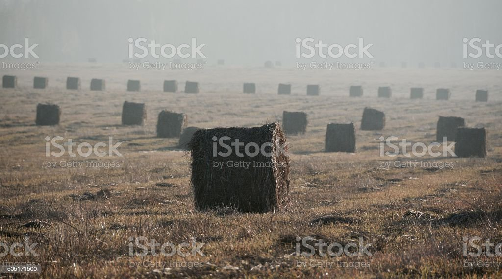 Rolls of straw royalty-free stock photo