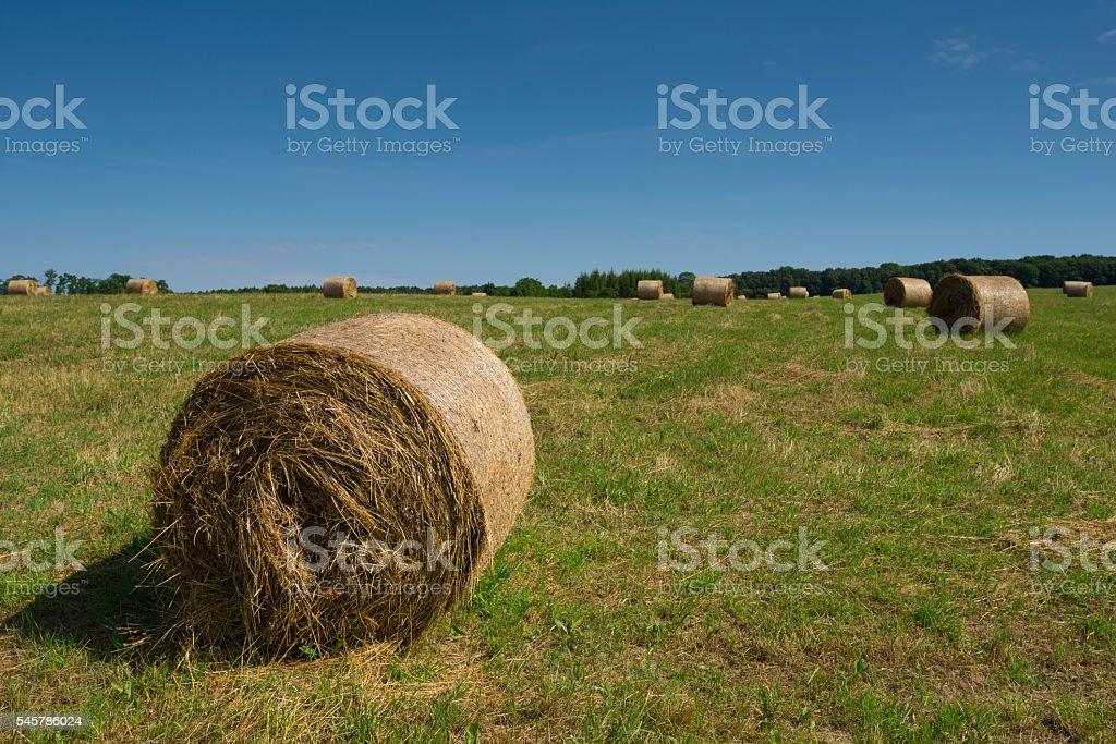 Rolls of wheat in field stock photo