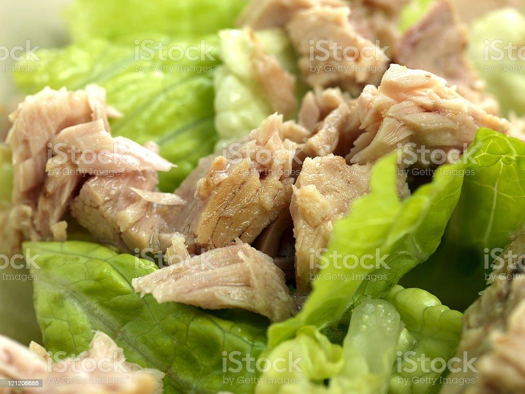 Romaine Lettuce and Tuna Salad royalty-free stock photo