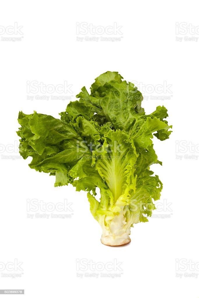 Romaine Lettuce Head stock photo