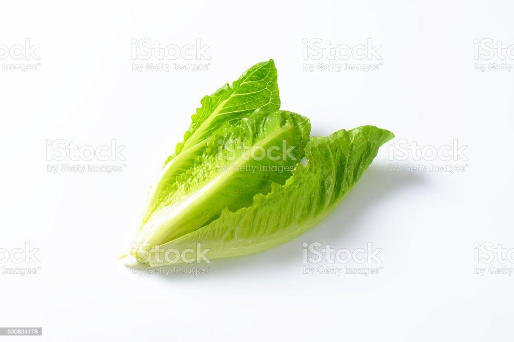 romaine lettuce heart stock photo