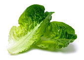 Romaine lettuce leaf
