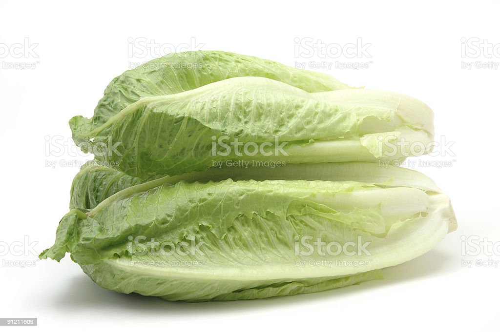 Romaine lettuce on a white background stock photo