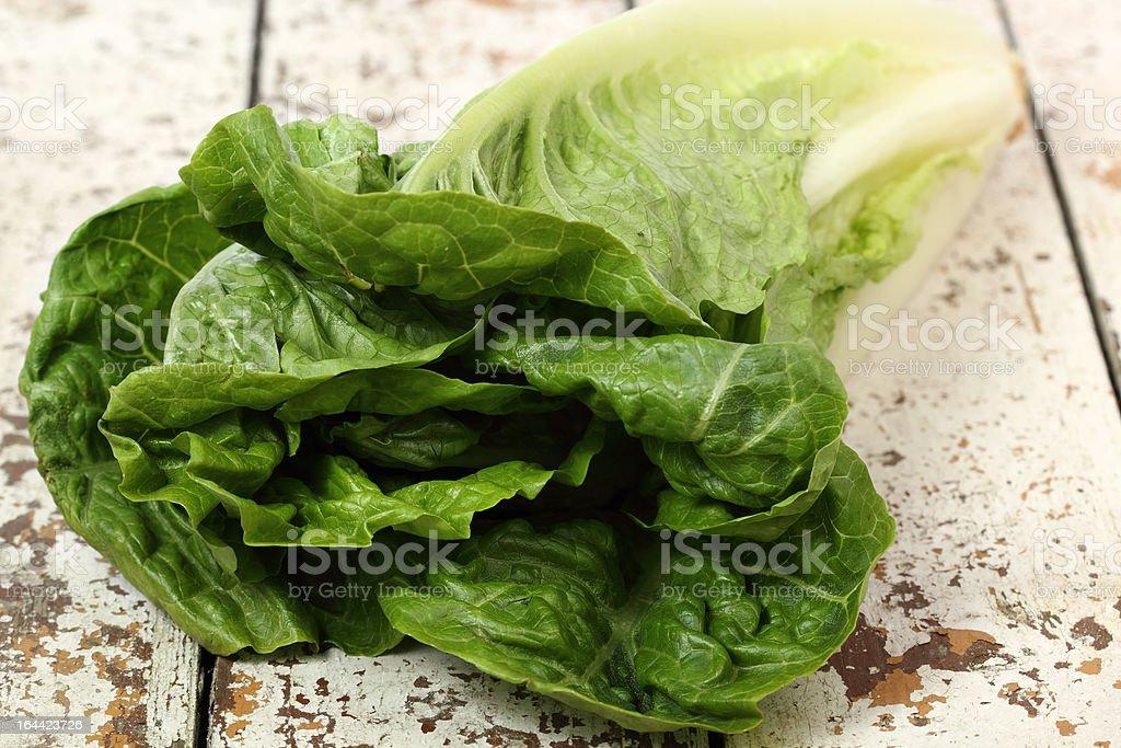 Romaine Lettuce royalty-free stock photo