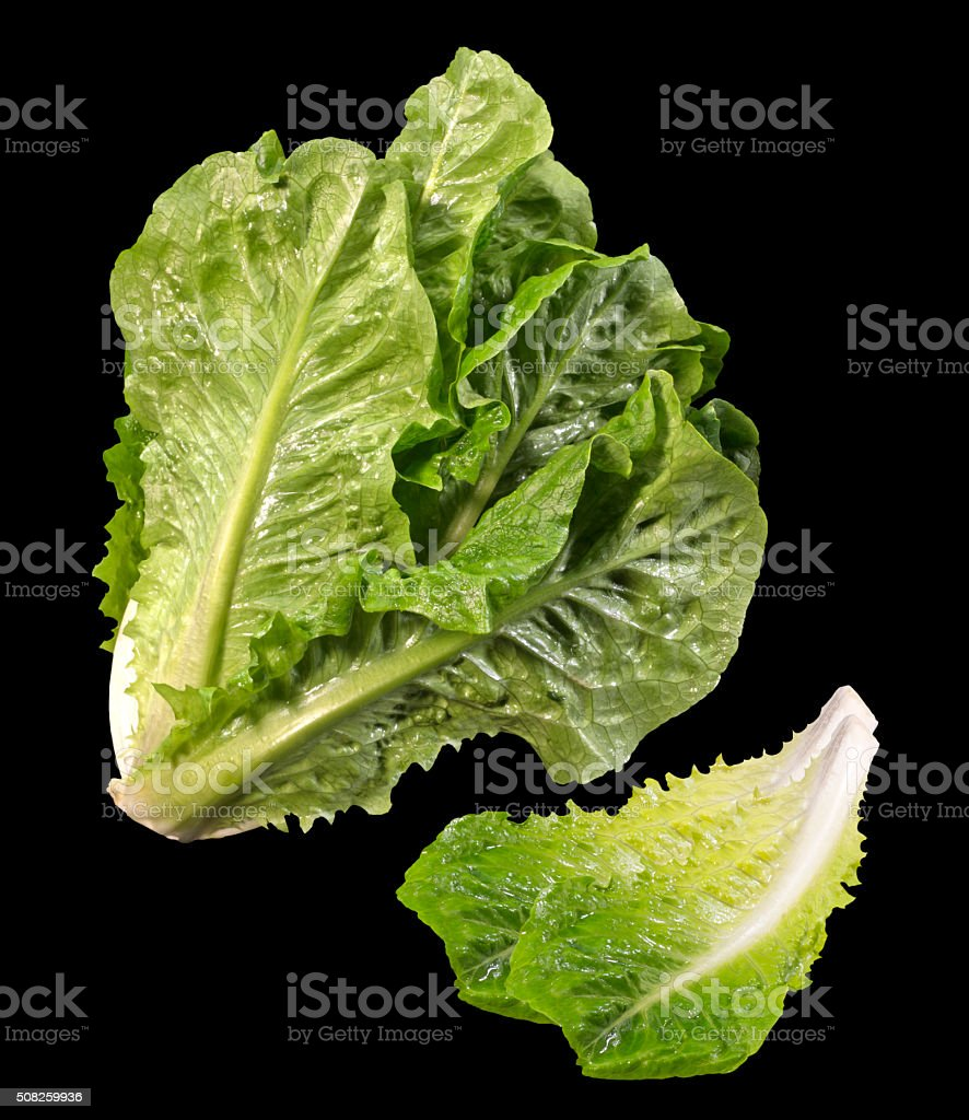 Romaine Lettuce(+clipping path) stock photo