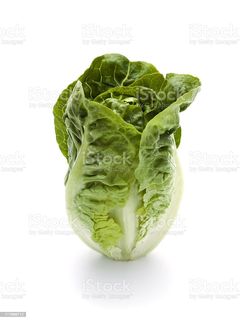 romaine lettuce standing stock photo