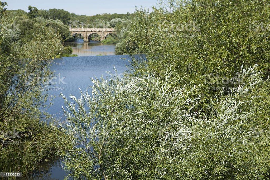 Roman bridge of Salamanca between trees stock photo