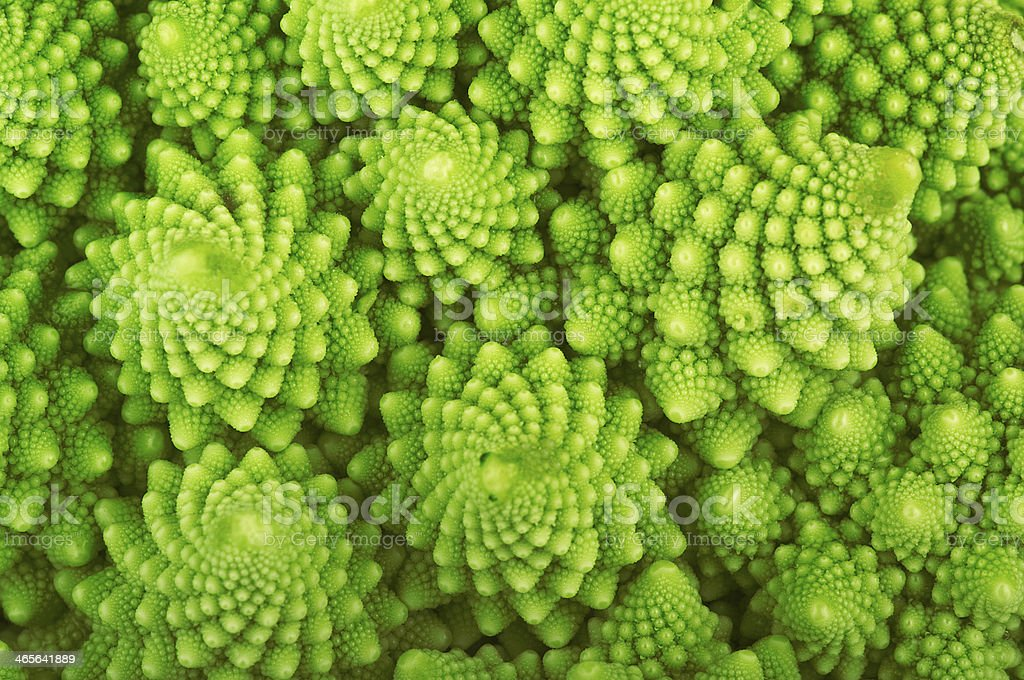 Roman broccoli stock photo