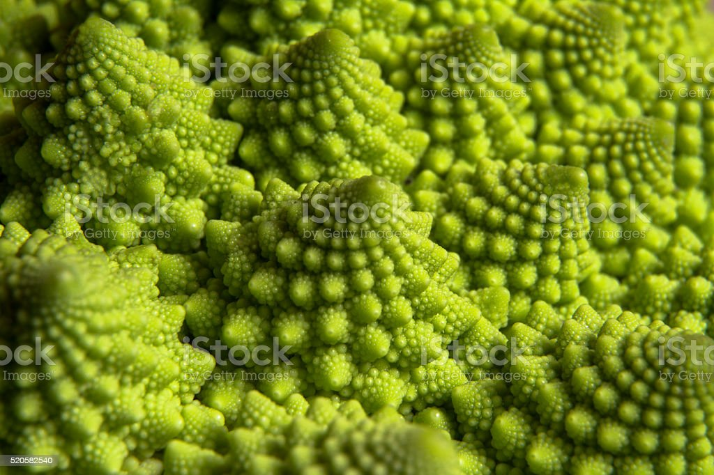 Roman broccoli stock photo