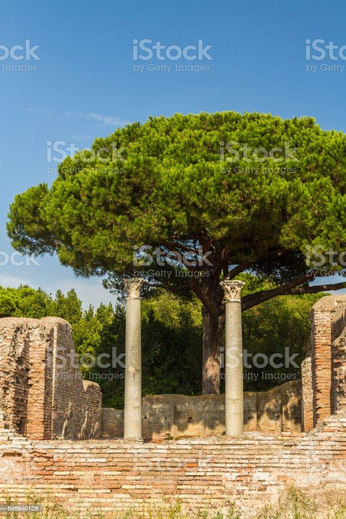 Roman pillars Ostia Antica Italy with Stone pine Pinus pinea. stock photo