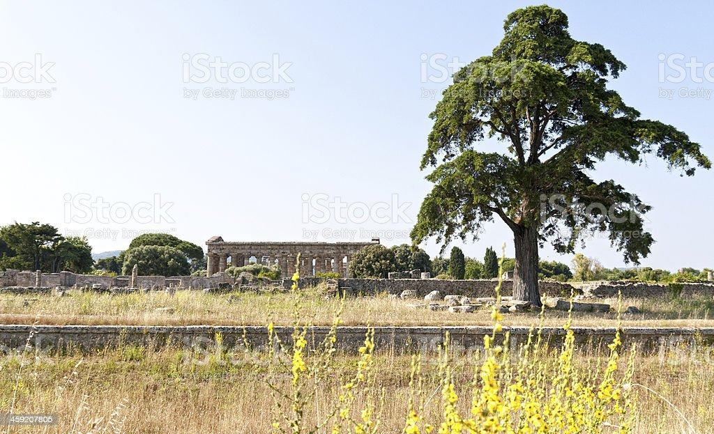 Roman temple - Paestum royalty-free stock photo