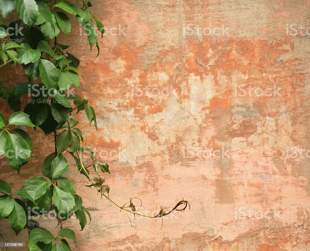 Roman wall background with vines stock photo