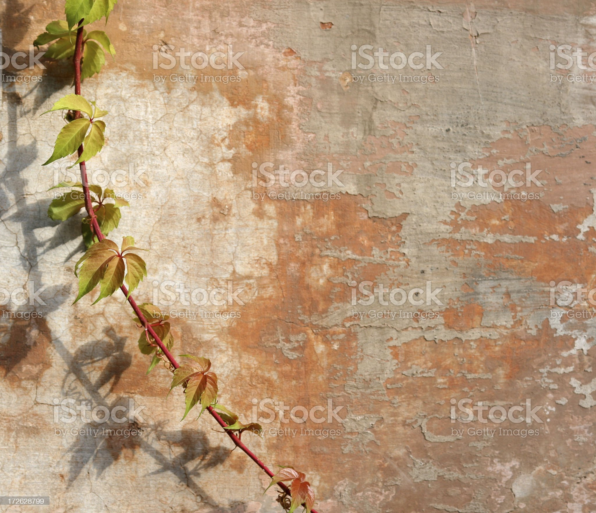 Roman wall with vine texture royalty-free stock photo