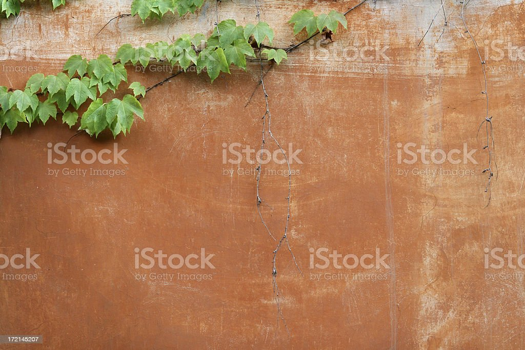 Roman wall with vine texture, Rome Italy royalty-free stock photo