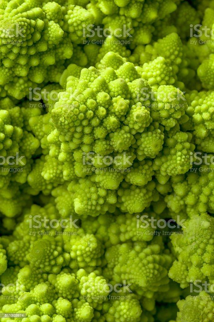 Romanesco broccoli (Brassica oleracea) stock photo