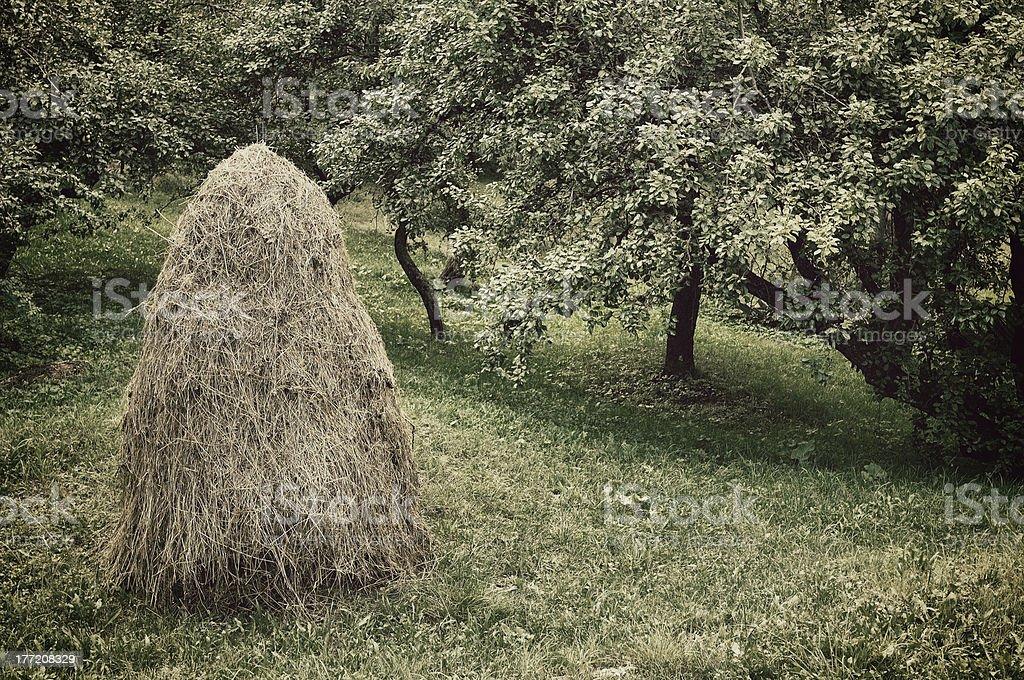 Romanian Haycock (Vintage) stock photo