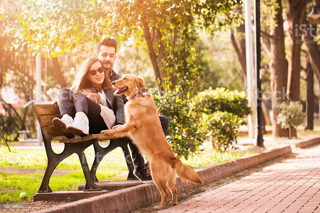 Romantic couple with their dog stock photo