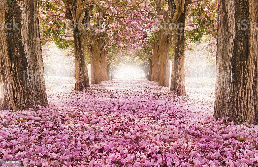Romantic flower tunnel stock photo