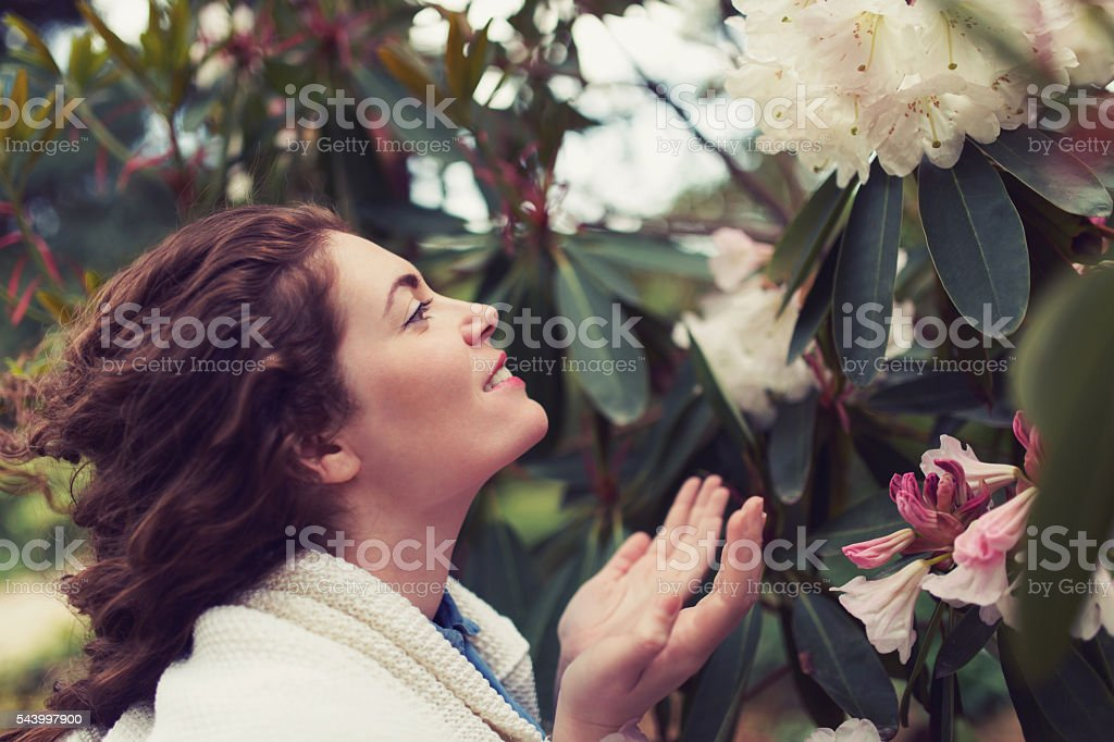 Romantic Garden stock photo
