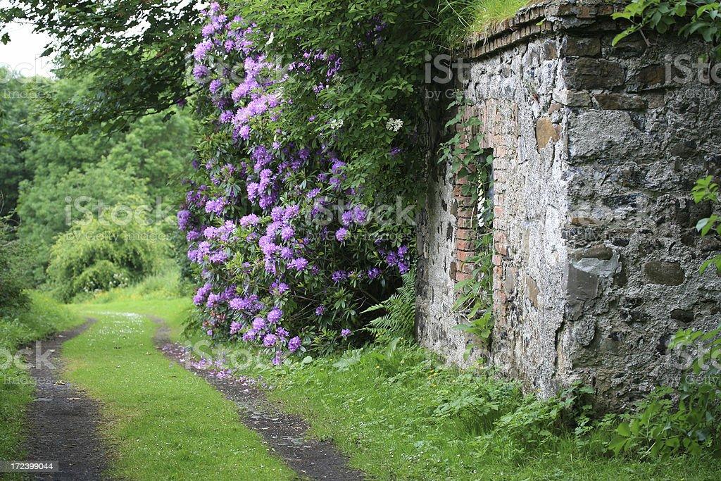 Romantic Irish garden path royalty-free stock photo