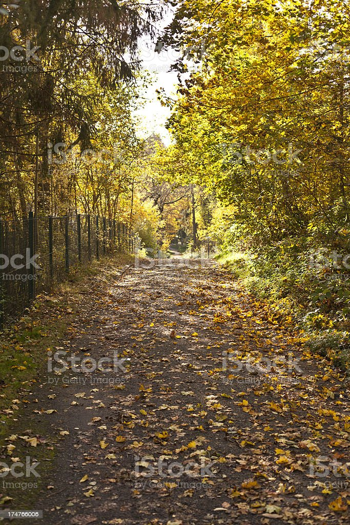 Romantic path in a forest stock photo
